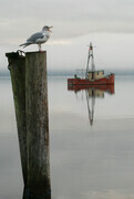 Gull and Boat