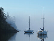 Mist on Coopers Cove